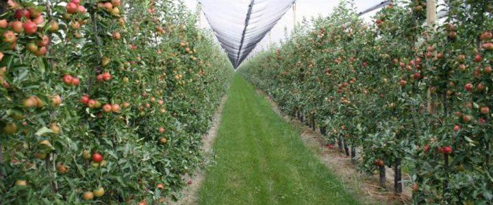 Az almaültetvény biológiai növényvédelme IX. – összegzés