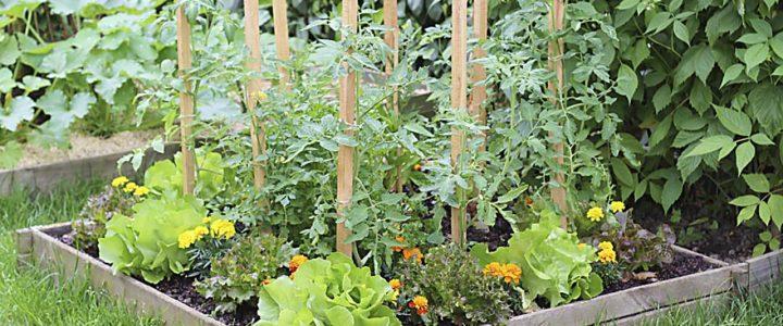 A növénytársításról (1.)