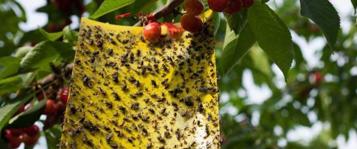 Gyümölcsösök biológiai növényvédelme I.