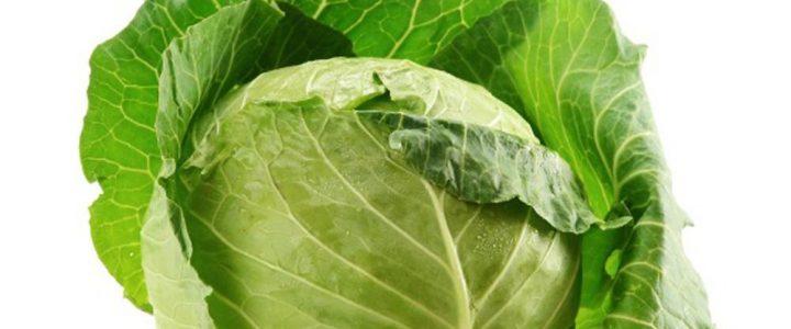 A korai zöldségnövények hajtatása Kárpátalján (1.)
