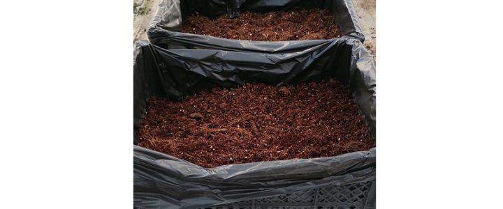 A kókuszroston történő hajtatás (2.) – Az előkészítési munkálatokról