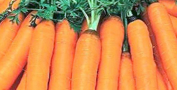 A sárgarépa tavaszi szabadföldi termesztéséről I.