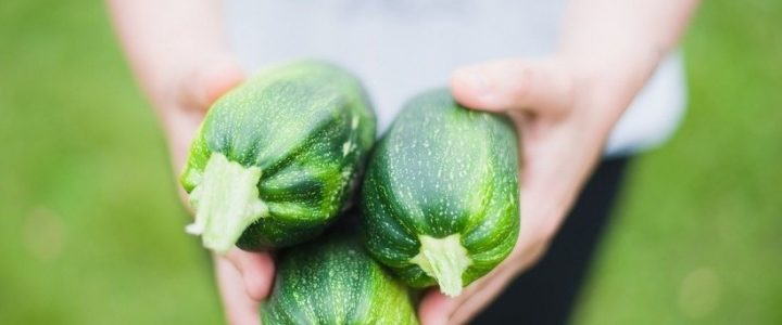 Hogyan termesszünk kertjeinkben cukkinit?