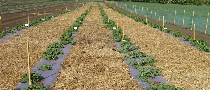 Másodnövények a kertjeinkben – Mit vethetünk, ültethetünk nyáron a kiskertünkben? (II/2.)