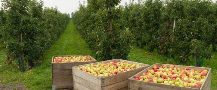 Az almaültetvény komplex biológiai növényvédelme, összefoglaló (I.)