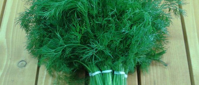Másodnövények a kertjeinkben. Avagy mit vethetünk, ültethetünk nyáron a kiskertünkben? (V.) – A kapor termesztése