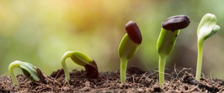 A foszfor szerepe a zöldségtermesztésben
