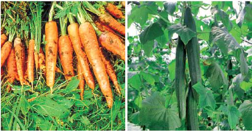 A kálium szerepe a zöldségtermesztésben